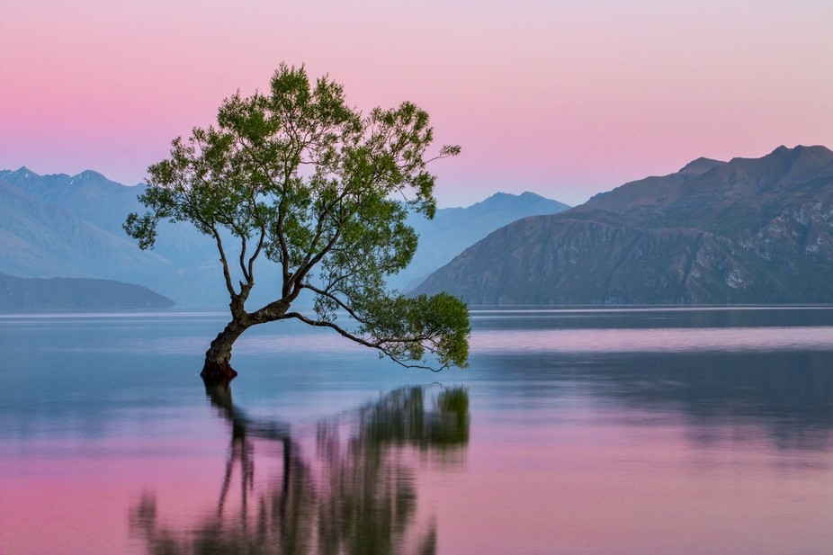 This tree in Lake Wanaka is the common postcard content for the town! Not only that, but an elder...