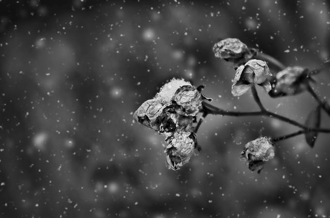 Falling snow by khockley - Black And White Compositions Photo Contest