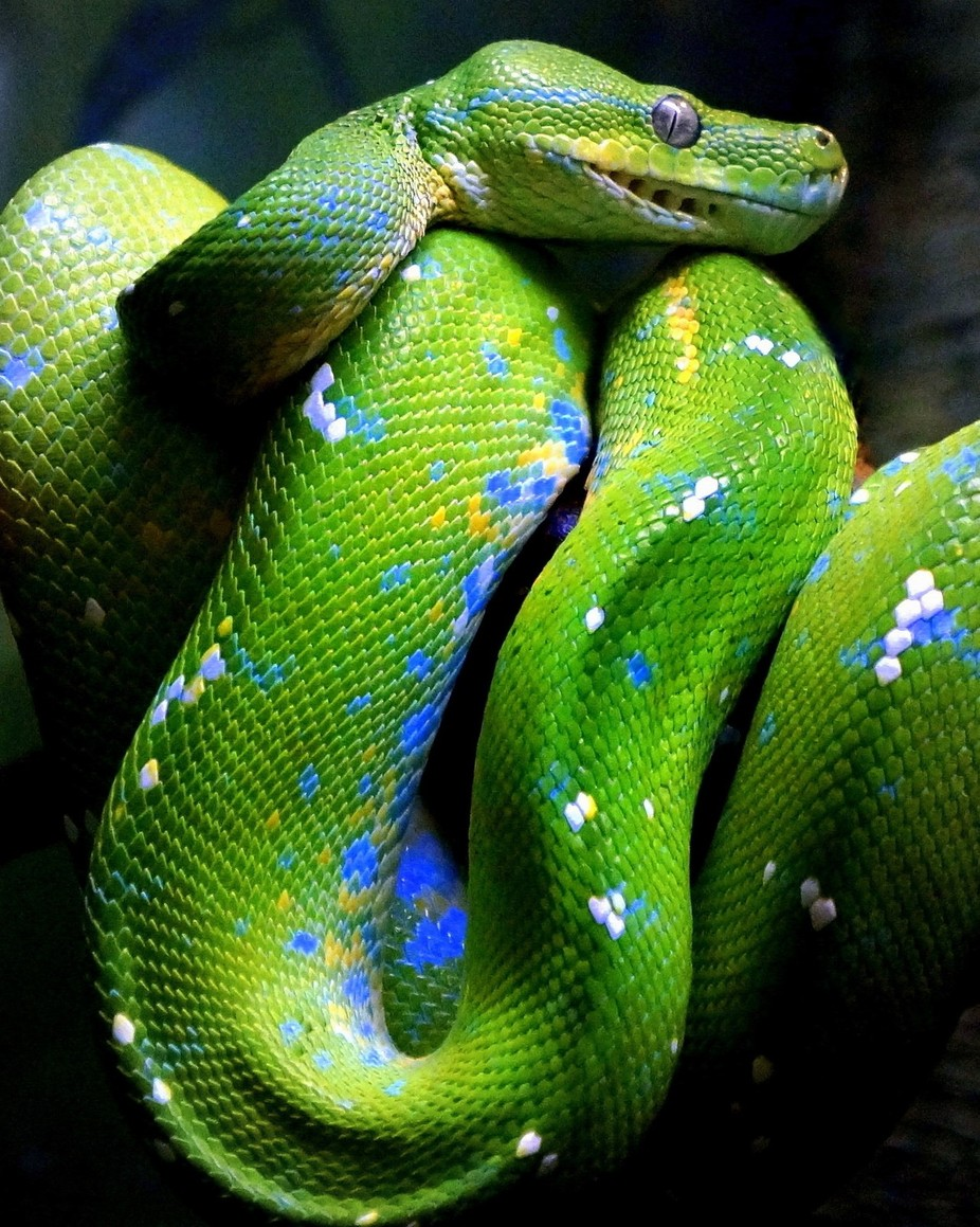 Coiled by njkerosky - Reptiles Photo Contest