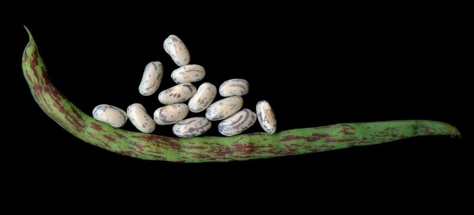 rattle-snake-snap-bean-3