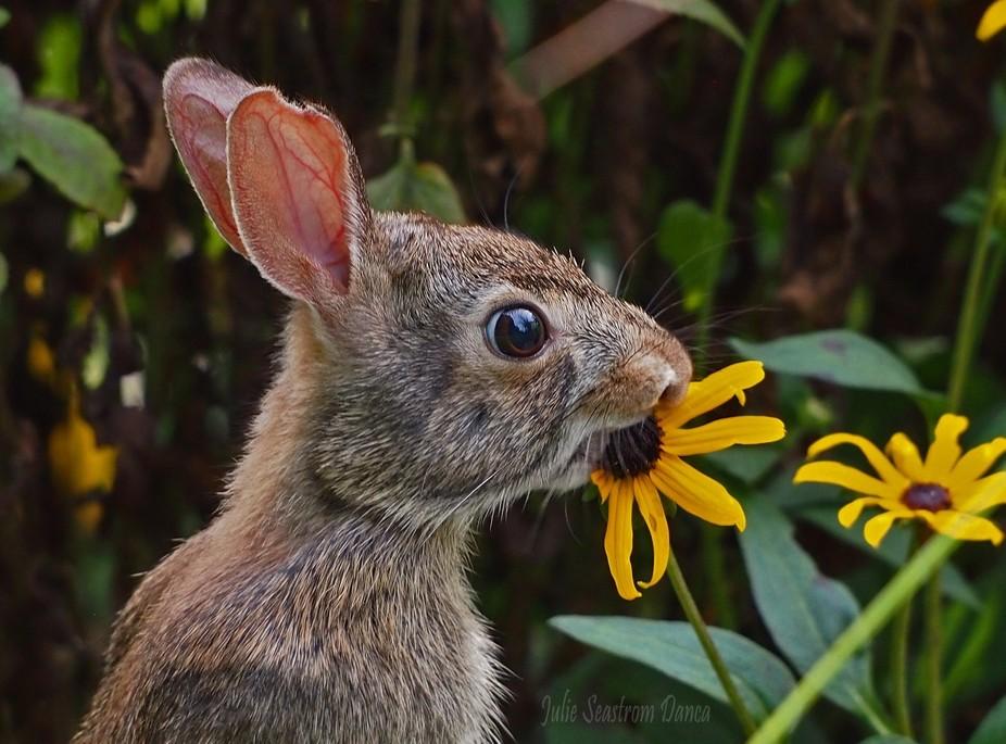 Bunny in my garden.