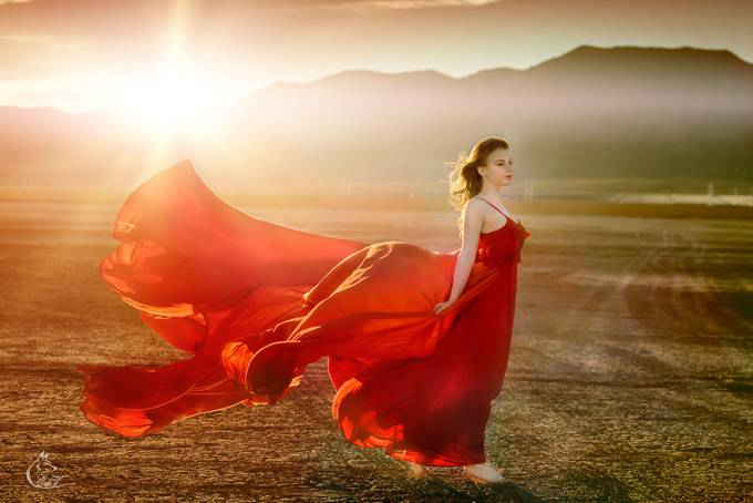 Desert Butterfly  by EdiV_Photography