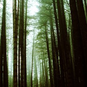 Sugar Pine walk is a beautiful full colour photograph presented by Josephine Caruana of Foto-Scape This photo by Josephine Caruana was taken at t...