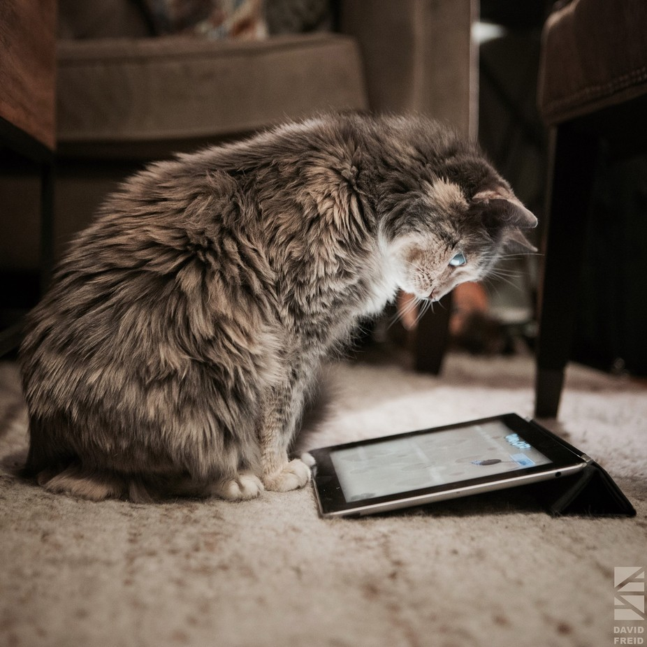 Her Own iPad by Dfreid - Pets With Character Photo Contest