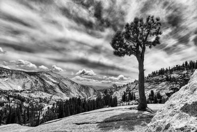 Lone Tree Digging into Granite