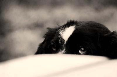 A little shy