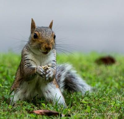 Squirrel Front & Center