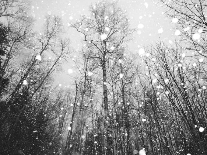 Blizzard by VictoriaKF - Winter In Black And White Photo Contest