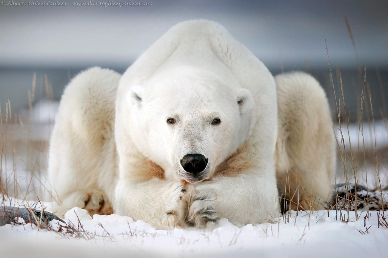 30+ Monumental Shots Of Big Mammals That Will Impress Anyone