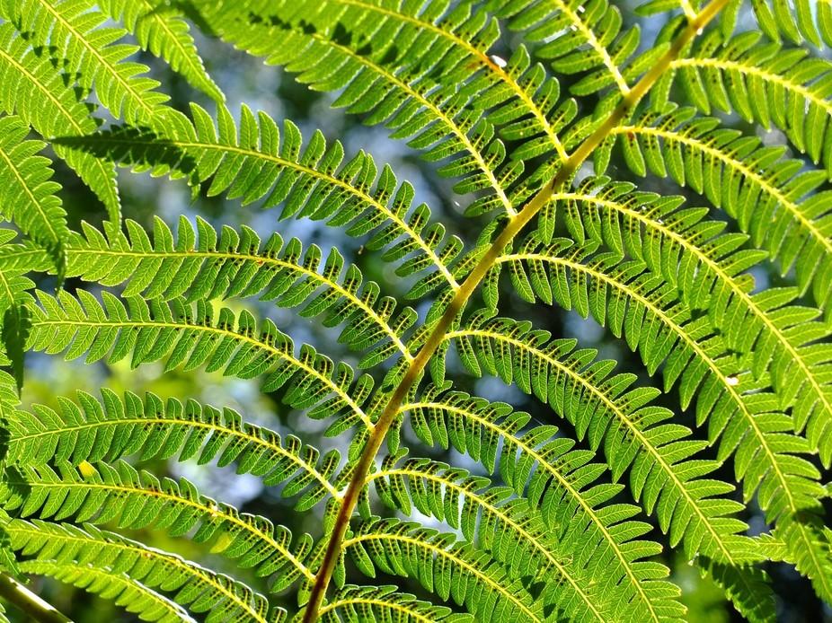 tree fern spores