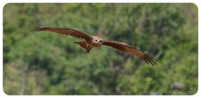 Kite in Flight !!