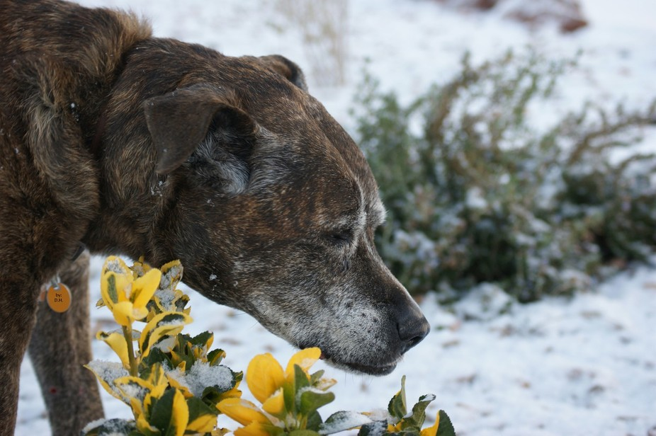Ending 2014 with a little bit of snow. Rascal, our next door neighbor\'s, was curious of what I wa...