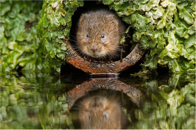 Is it safe to come out by hibbz - Animals And Water Photo Contest