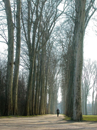 Man Walking in Versailles
