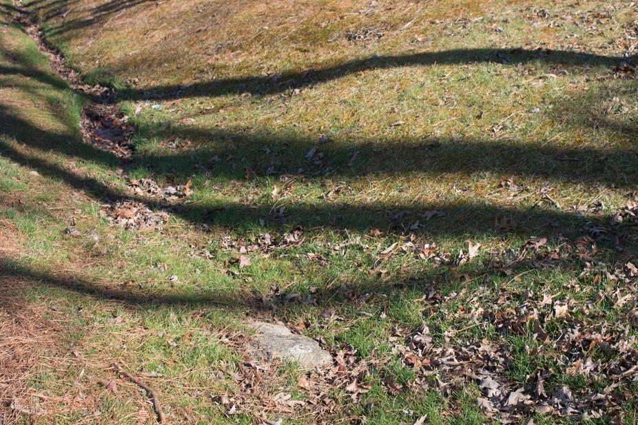 Shadows of trees fall across a shallow ravine.