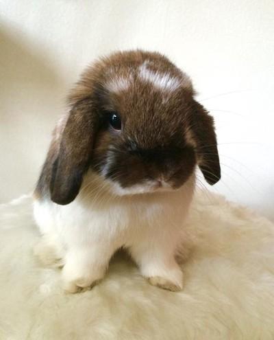 Beau my Bunny
