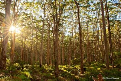 Boranup Forrest Aus Day 4