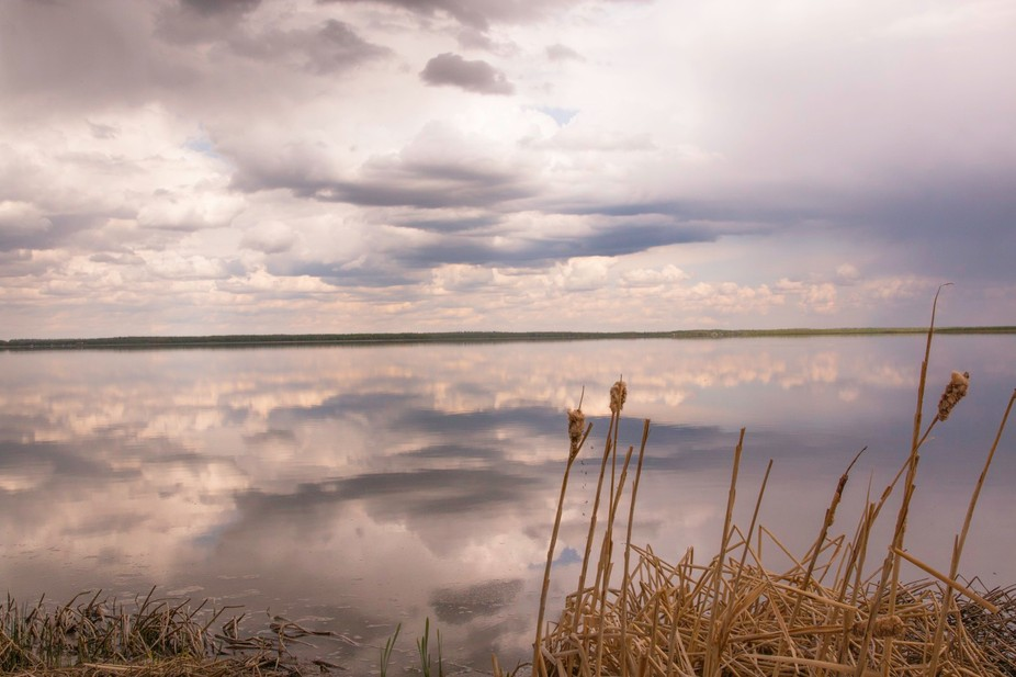 It was a cloudy spring day when I headed to the lake looking for some photo ops. I had never seen...
