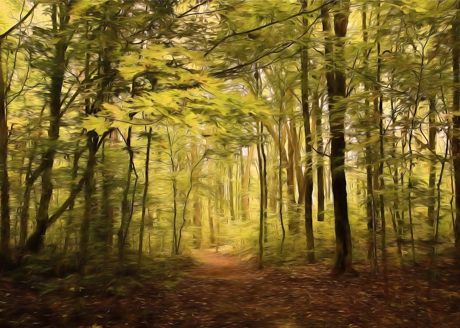 Oka Park trails during autumn season, lots of leaves still on the ground in November - added a pa...