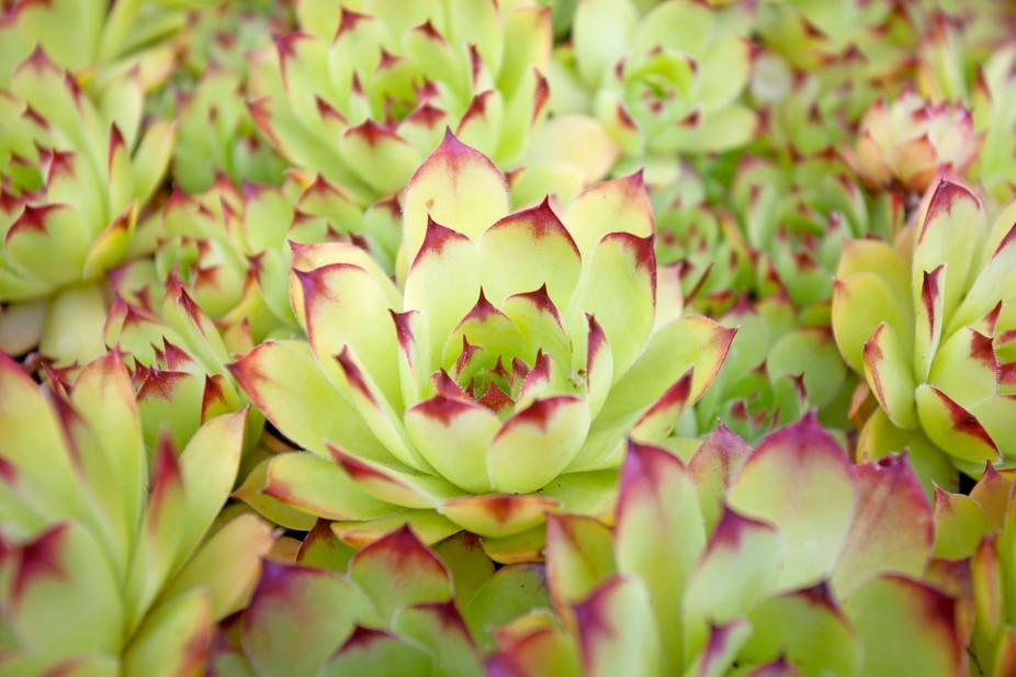 close up of succulents
