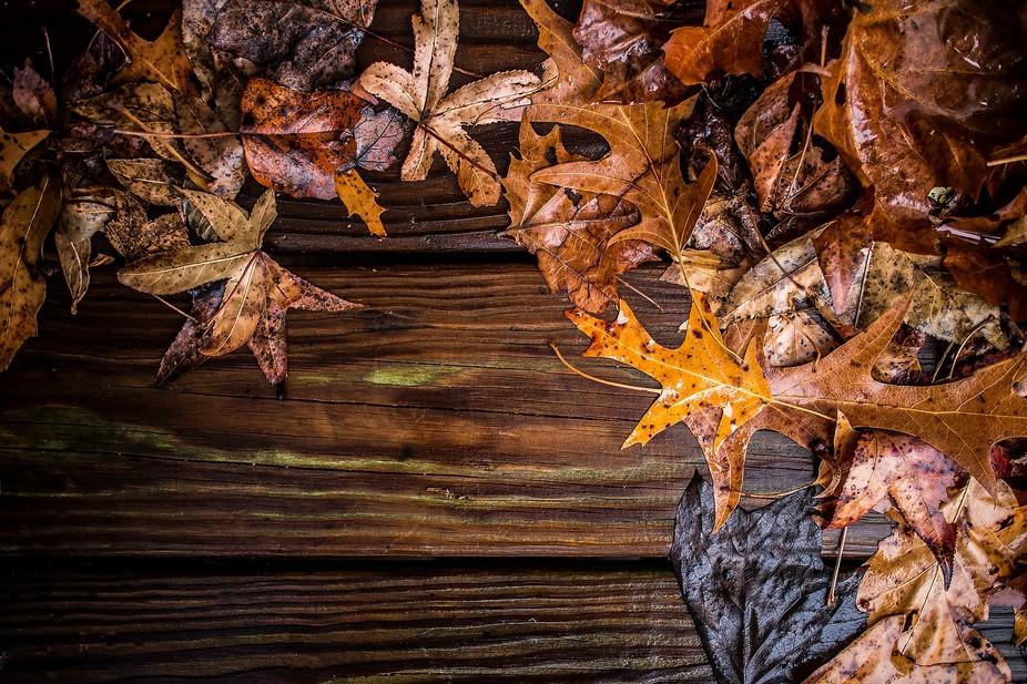 Leaves on Deck