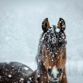 Still enjoying the snow.  Snow and cold beats horse flies.