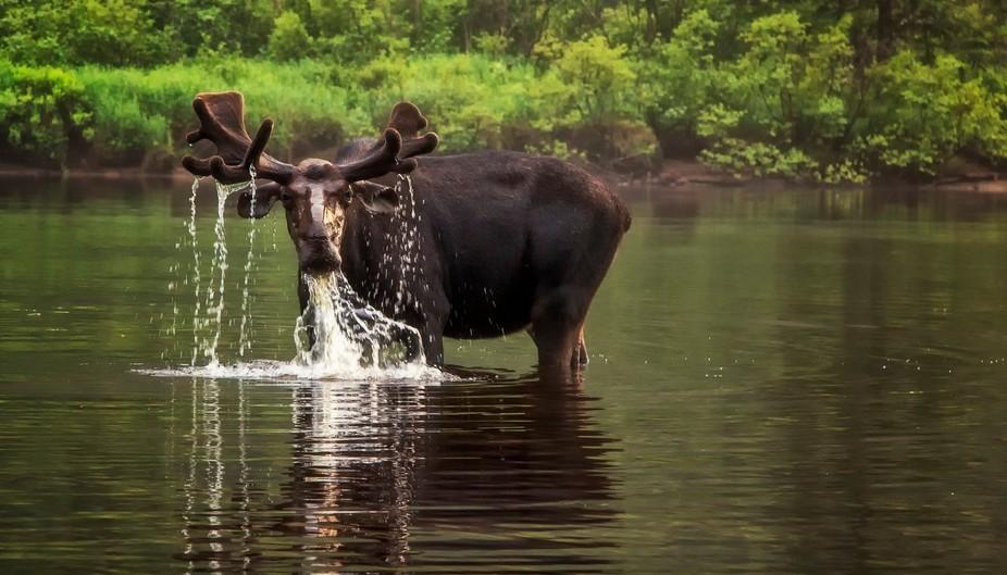 Thirsty!!! La rivière Jacques Cartier,North of Quebec City.