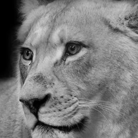 I fell in love with this white lioness' eyes she was just beautiful.  www.facebook.com/MeeluxPhotography www.twitter.com/MeeLuxPhotos