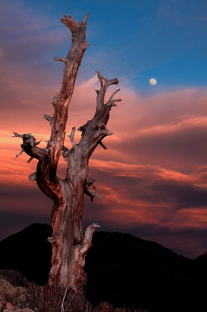 moon dancer by Truogre - Image of the Year Photo Contest by Snapfish