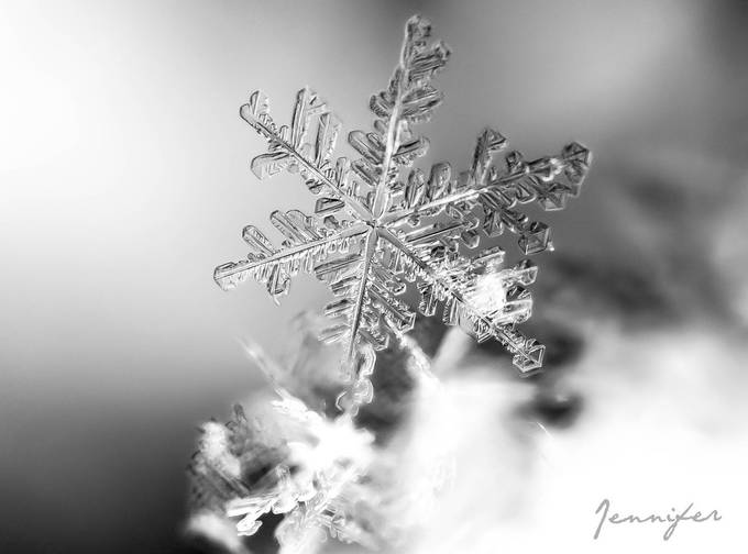 The Snowflake by Storyofmylyfe - Winter In Black And White Photo Contest
