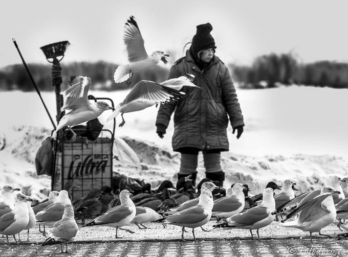 Friendly Fowl  by fotodoro - Black And White Compositions Photo Contest