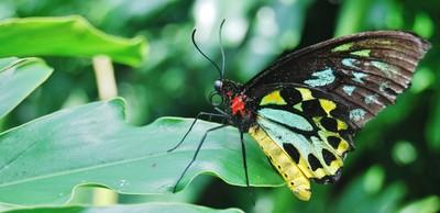Toronto Butterfly park
