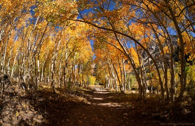 Fall Color in the Eastern Sierra