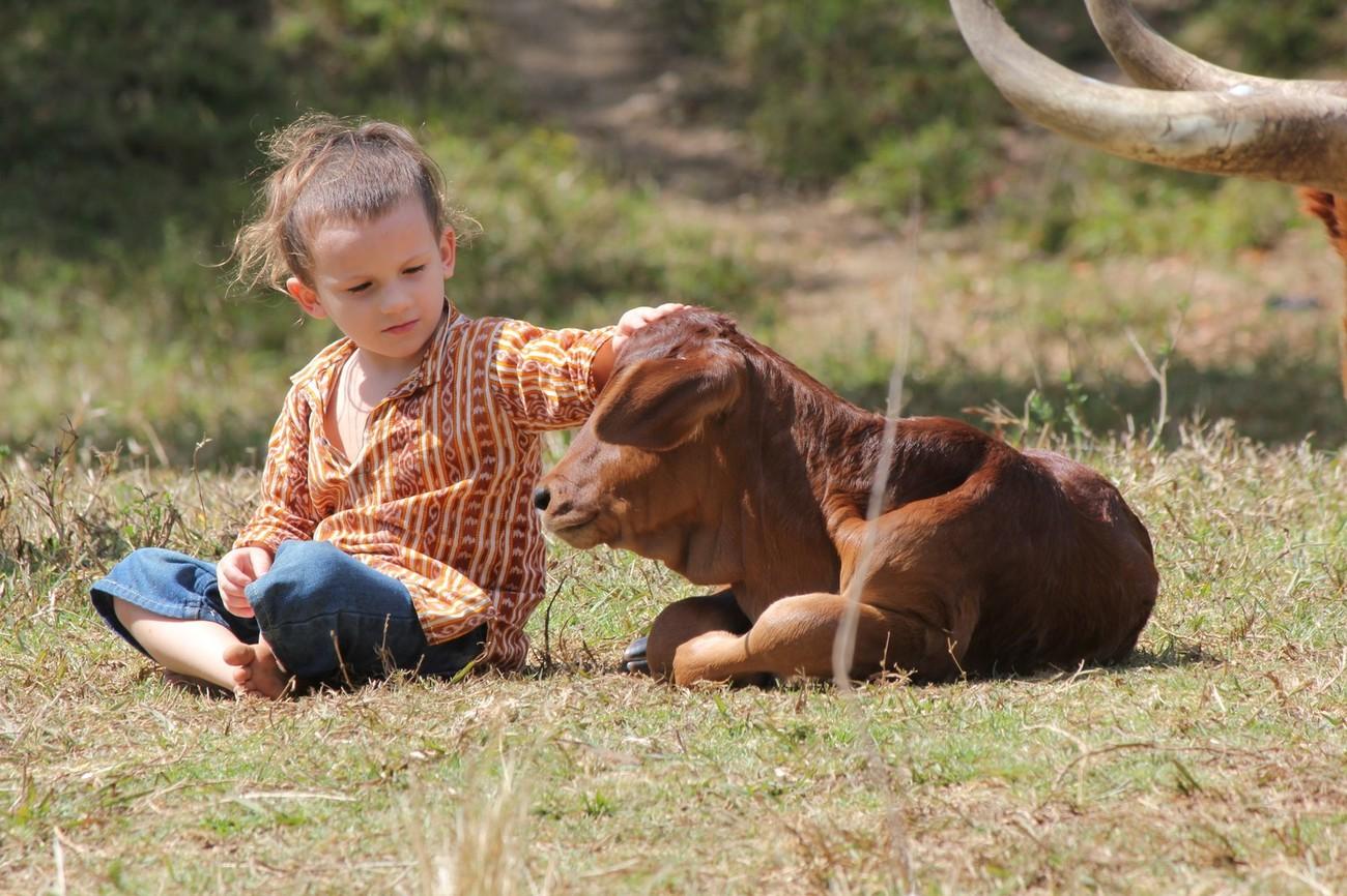 Balah with newborn calf, Komali