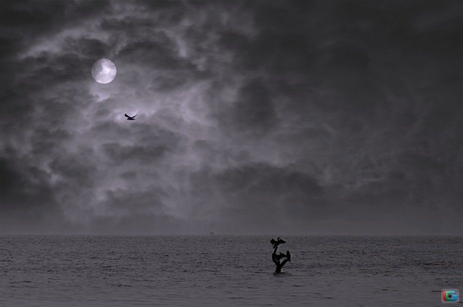 cormorants, mystic birds, birds, dark, B&W, sepia, before storm, clouds, dark sun, fog, lands...