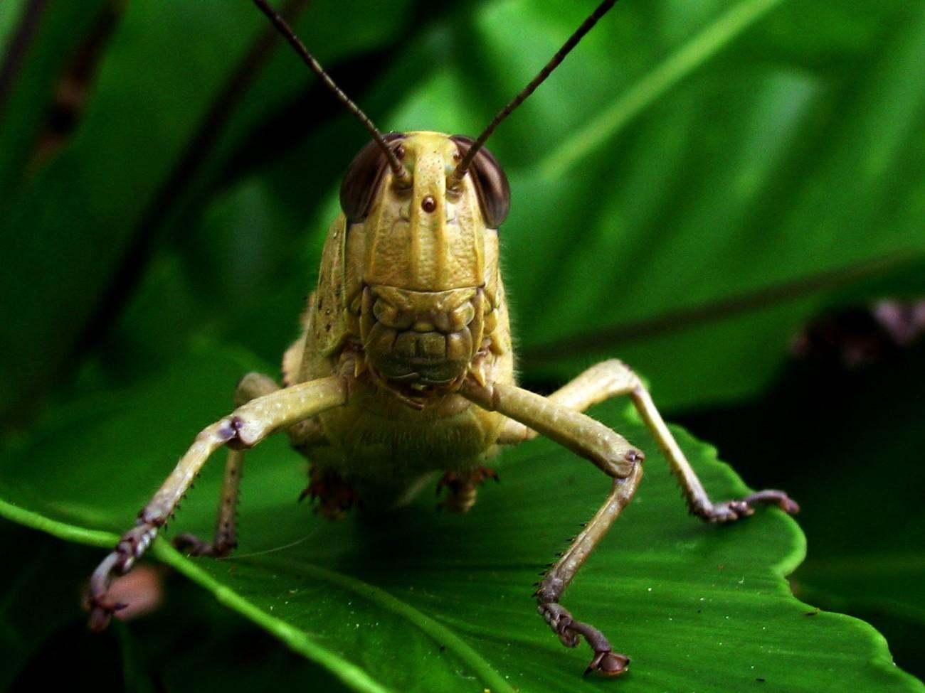 Grasshopper 2_2