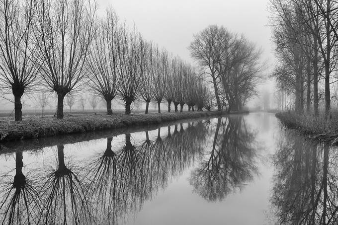 Along De Dommel by Irene_van_Nunen - Silhouettes Of Trees Photo Contest