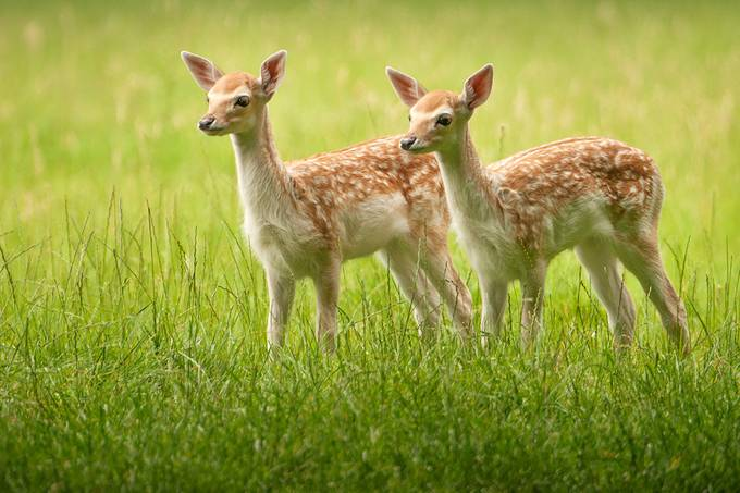 Twins? by Irene_van_Nunen - More Of The Same Photo Contest