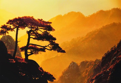 Lone Pine, Huang Shan