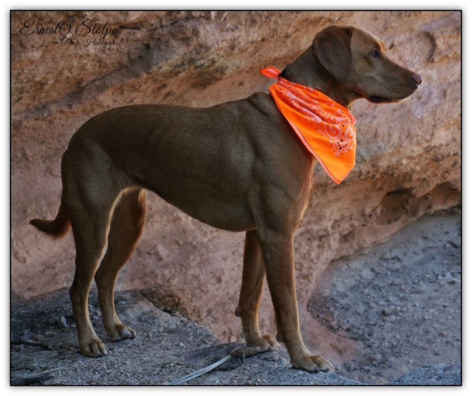This is my favorite dog to take on photo excursions in the wild, she has endless energy and will ...