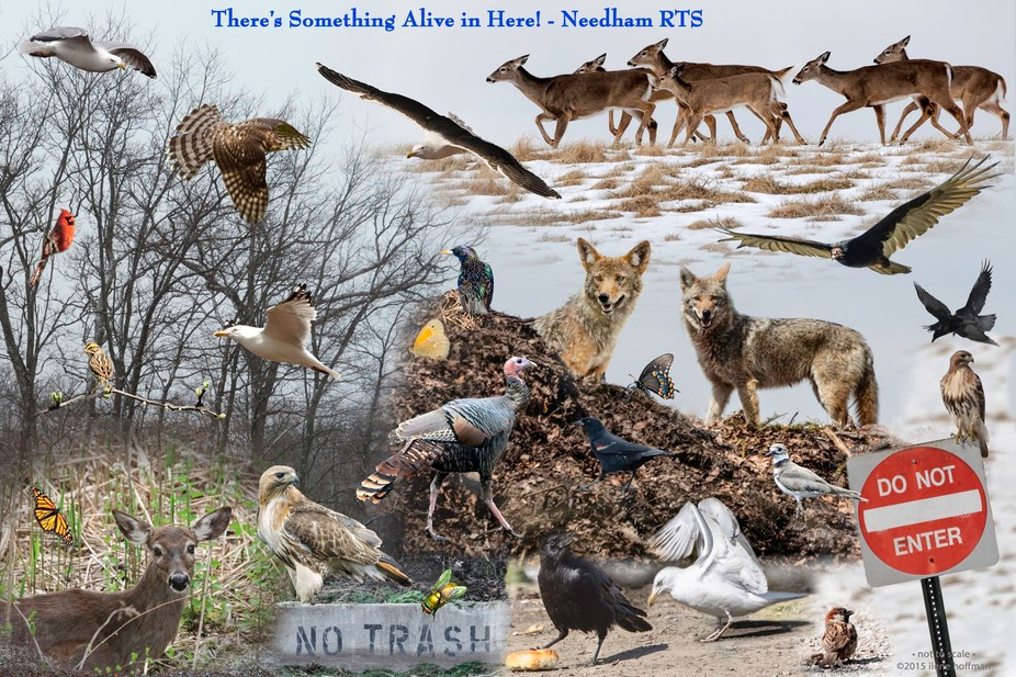 I capture wildlife with my Nikon. I created this poster from my individual shots with Photoshop C...