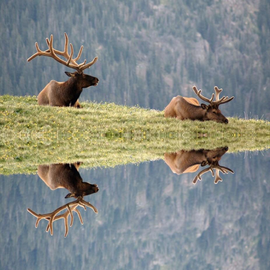 Dizzy Much by Athena_B - Image of the Year Photo Contest by Snapfish
