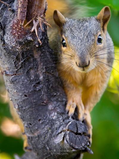 The Shy Squirrel 2