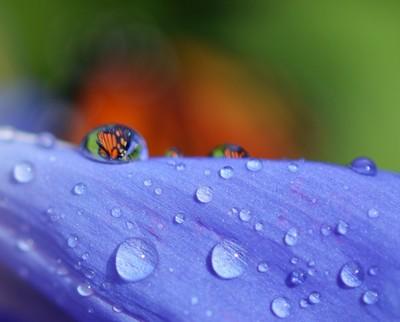 butterfly in the drop