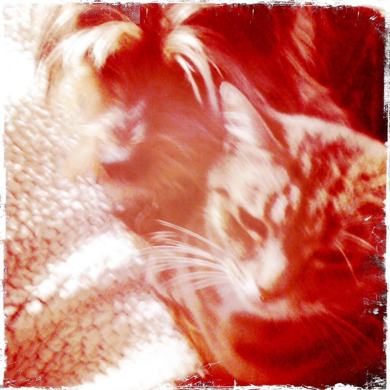 Muffy and Mishka