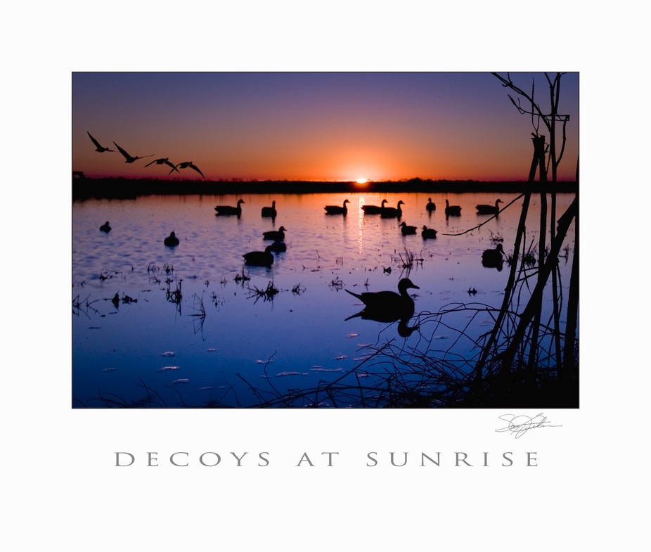 Sunrise-decoys-for-web2