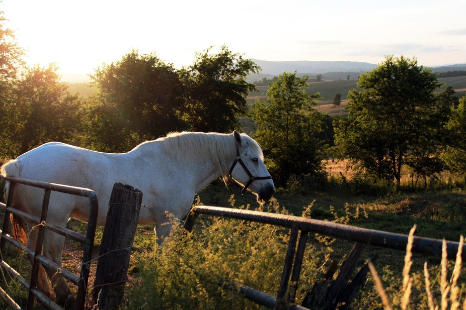 horse in field at evening