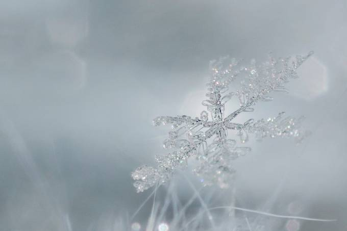 Winter by VHiggins - Snowflakes Photo Contest