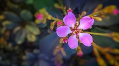Little Pink