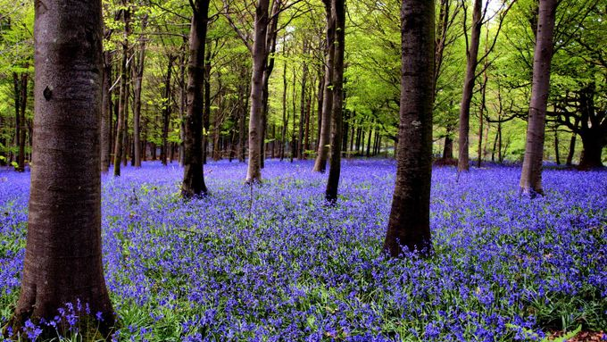 Sea of Blue by Cobber - Divine Forests Photo Contest